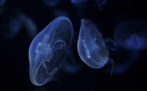 Wallpaper dark, jellyfish, blue, float