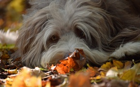 Picture autumn, look, each, dog