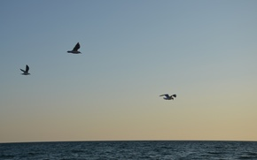 Picture sea, water, birds, blue, relax, seagulls, the air, calm