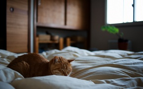 Picture bed, red, sleeping, cat