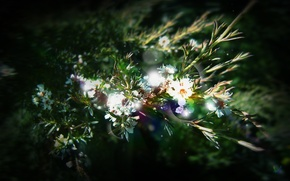 Picture leaves, rays, flowers, Greens, plants, the sun