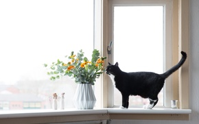Picture cat, flowers, window