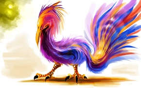 Picture bird, feathers, beak, tail, claws