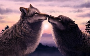Picture forest, sunset, two, Wolves