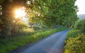Picture road, the sun, rays, trees, foliage, herbs