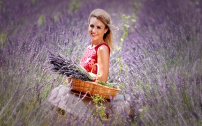 Picture field, girl, nature, basket, lavender