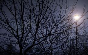 Picture winter, snow, night, tree, branch, silhouette, Nature, night, winter, snow, tree