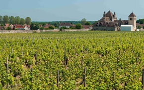 Picture the city, castle, France, vineyard, Burgundy