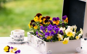 Picture flowers, table, Cup, case, violet