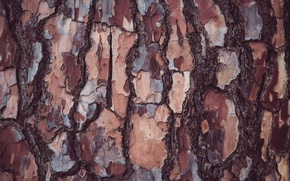 Picture tree, texture, bark