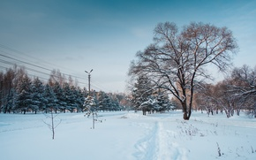 Picture winter, the sky, snow, trees, nature, the city, sky, nature, winter, snow, tree