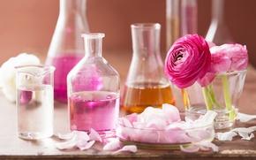 Picture oil, roses, petals, pink, Spa, Spa, roses, perfume, oil, Petals