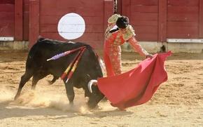 Picture bull, Matador, Korea