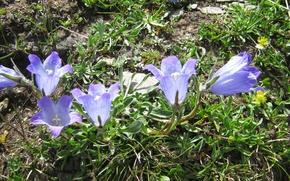 Picture flowers, meadow, field