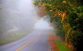 Picture autumn, asphalt, fog, markup