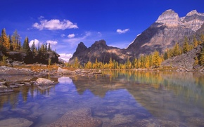Picture forest, nature, mountain lake