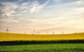 Picture field, summer, landscape, windmills, rape