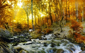 Picture autumn, forest, trees, stream, stones, foliage, yellow
