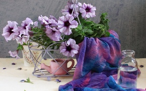 Picture flower, summer, water, flowers, nature, lilac, tenderness, bottle, beauty, bouquet, spring, petals, beautiful, fabric, lake, ...