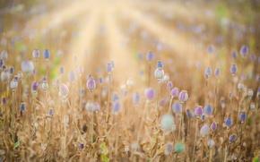Picture Maki, summer, field