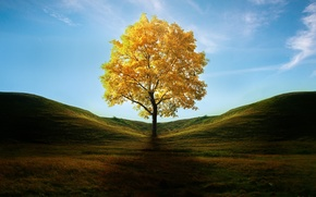 Picture autumn, grass, leaves, tree, hills, shadow, art, yellow