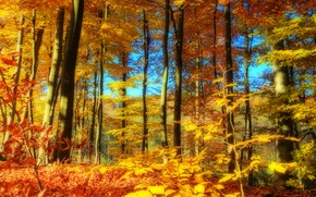 Picture autumn, forest, the sky, trees, landscape, nature, time of the year