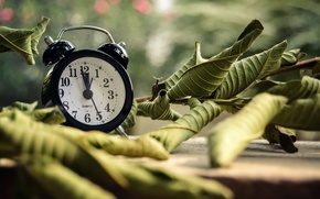 Picture leaves, time, watch, alarm clock