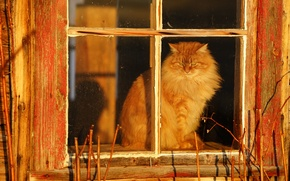 Picture cat, village, window, fluffy