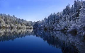 Picture white, winter, cold, forest lake