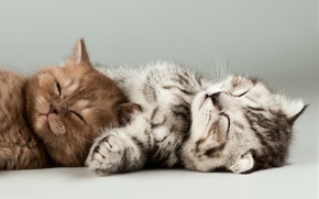 Picture animals, kittens, light background