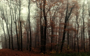 Picture Autumn, forest, fog, trees, autumn, trail, fog, trees, forest