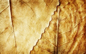 Picture autumn, leaves, background, yellow, dry