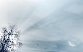 Wallpaper rays, rays, light, tree, tree, moon, birds, luna, the moon, birds, the sky, landscape