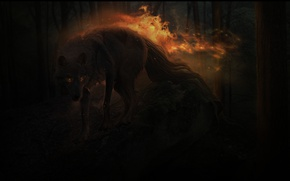 Picture forest, night, fire, wolf, by xXNamaste
