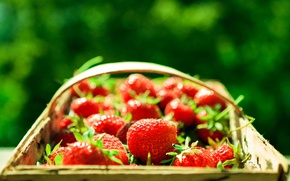 Picture greens, macro, berries, background, basket, strawberry, red, basket