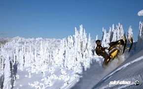 Picture forest, snow, sport, sport, mountain, snow, snowmobile, summit, snowmobile, ski-doo, brp, skidoo