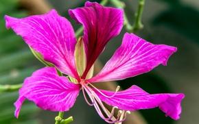 Picture flower, paint, petals, exotic