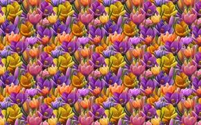 Picture flower, background, texture, spring, art, Krokus