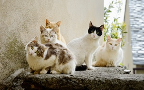Picture summer, look, cats, group