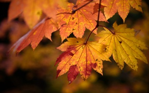 Picture nature, leaves, autumn, color