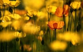 Wallpaper flowers, yellow, flower