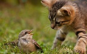 Picture cat, grass, cat, nature, kitty, bird, hunting, instinct