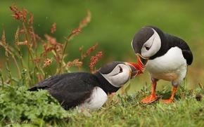 Picture love, birds, stubs