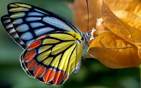 Picture autumn, leaves, nature, butterfly, paint, color, moth