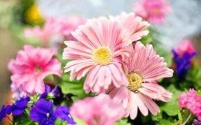 Wallpaper light, flowers, spring, petals, garden, pink, blue, bokeh, violet, Daisy