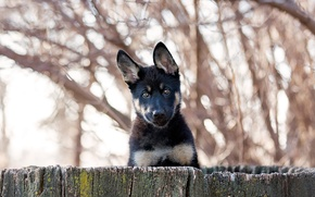 Picture each, the fence, puppy