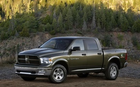 Picture forest, trees, spruce, Dodge, 1500, Ram