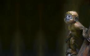 Picture art, monkey, jun ling