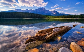 Picture forest, water, mountains, stones, shore, transparent, snag