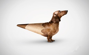 Wallpaper dog, risovaca, Dachshund